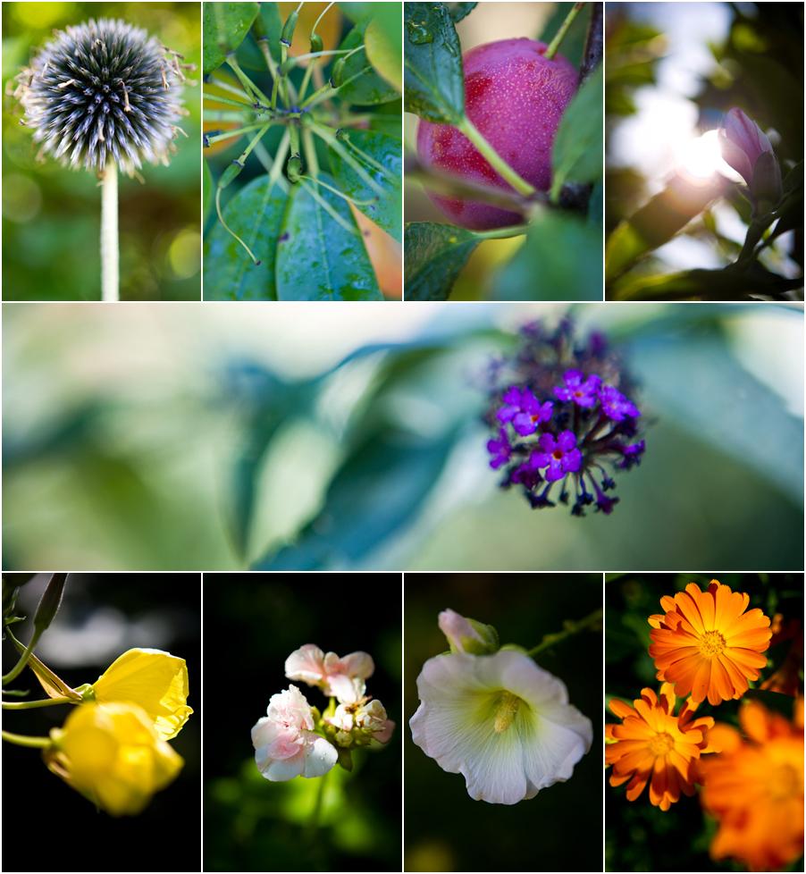 blomster_i_haven